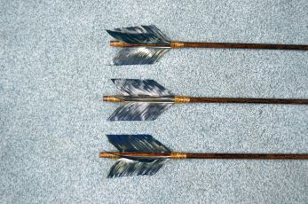 Reed branch Arrow